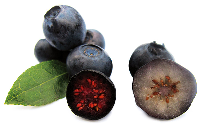 Wild bilberries and cultivated blueberries | Arctic Bilberry
